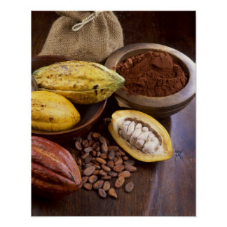 Cosse de cacao contenant les haricots de cacao qui poster