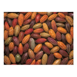 Cosses de cacao carte postale