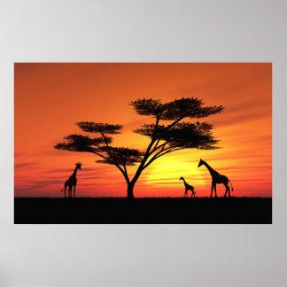 Coucher du soleil africain affiches