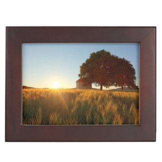 Coucher du soleil au-dessus de champ de blé boîte à souvenirs