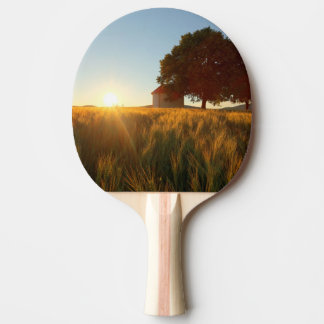 Coucher du soleil au-dessus de champ de blé raquette de ping pong