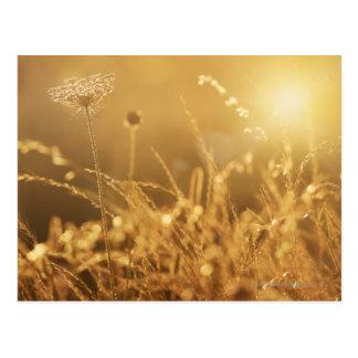 Coucher du soleil au-dessus de pré d'été avec la carte postale