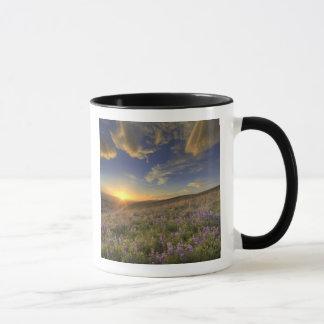 Coucher du soleil au-dessus des montagnes de mug