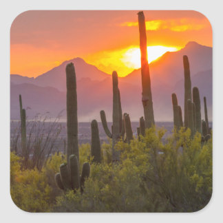 Coucher du soleil de cactus de désert, Arizona Sticker Carré