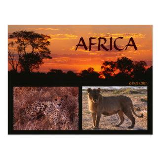 Coucher du soleil de l'Afrique et carte postale de