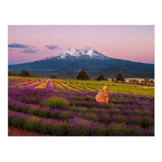 Coucher du soleil de lavande de Mt. Shasta… Carte Postale