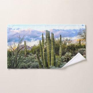 Coucher du soleil de Succulent de Scottsdale