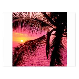 Coucher du soleil Hawaï de établissement tropicale Carte Postale