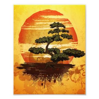 Coucher du soleil japonais d'arbre de bonsaïs impression photo