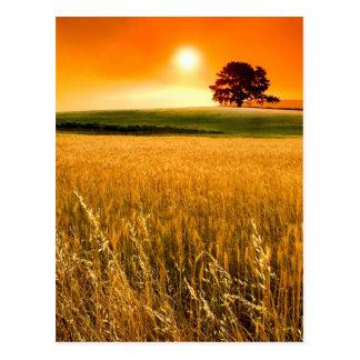Coucher du soleil rouge sang carte postale