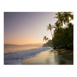 Coucher du soleil sur la plage frangée par paume, carte postale