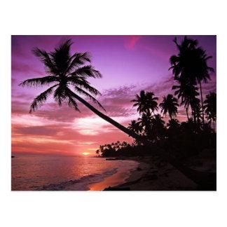 Coucher du soleil tropical carte postale