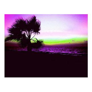 Coucher du soleil tropical de plage et d'arbres da cartes postales