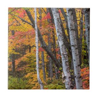 Couleur d'automne dans la forêt près du port de petit carreau carré