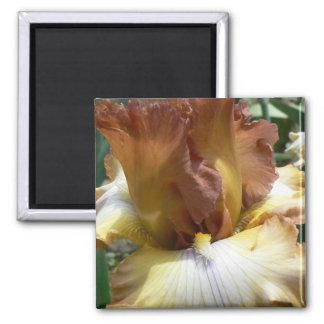 Couleur peu commune d'iris magnet carré