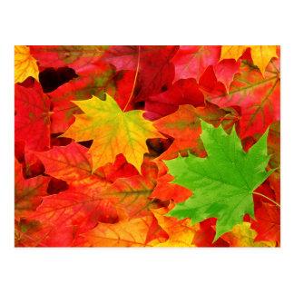 Couleurs d'automne cartes postales