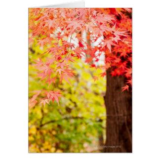 Couleurs lumineuses d'arbre d'érable japonais en cartes