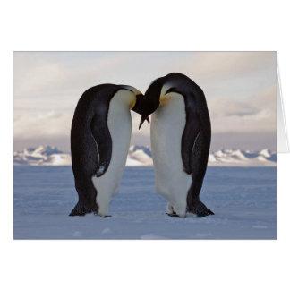 Cour - carte de voeux de pingouins d'empereur