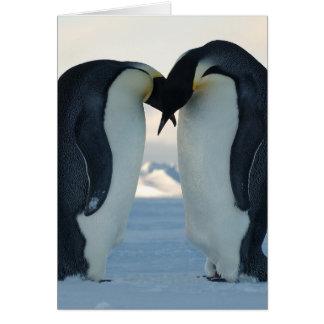 Cour de pingouin d'empereur carte de vœux