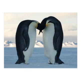 Cour de pingouin d'empereur carte postale