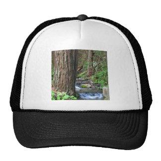Courant de séquoia d'arbre casquette de camionneur
