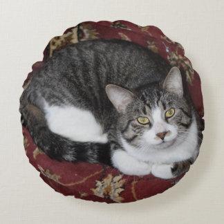 Courbez-vous avec un chat coussins ronds