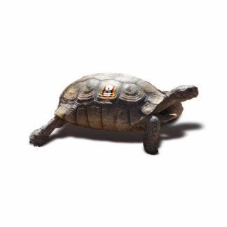 Coureur 8 de tortue photo en découpe