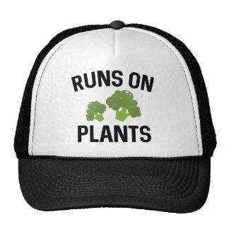 Courses sur des plantes casquettes de camionneur