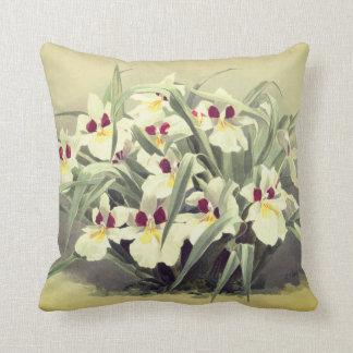 Coussin Carreau vintage d'orchidée d'odontoglossum
