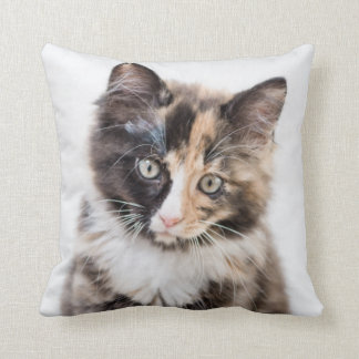 Coussin Chaton adorable de calicot