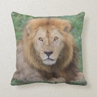 Coussin Lion masculin se couchant