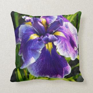 Coussin pourpre ensoleillé d'iris