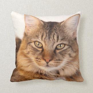 Coussin Ragondin Kitty du Maine