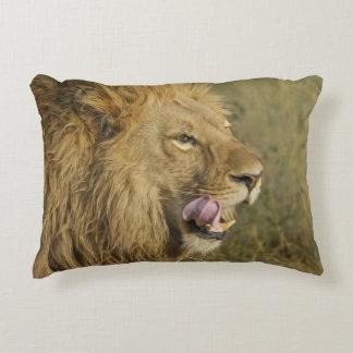 Coussins Décoratifs Portrait de mâle de lion léchant sa bouche