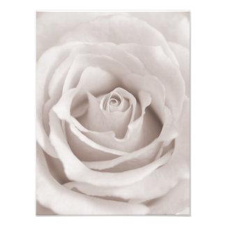 Coutume rose blanche et crème de sépia vintage photographie