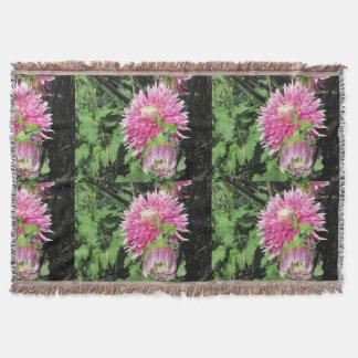 Couverture rose de jet de chrysanthème