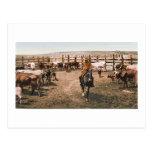 Cowboy 1904 du Colorado Carte Postale