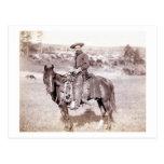 Cowboy solitaire carte postale