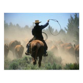 Cowboy sur le cheval avec le lasso conduisant des carte postale