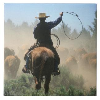 Cowboy sur le cheval avec le lasso conduisant des  grand carreau carré