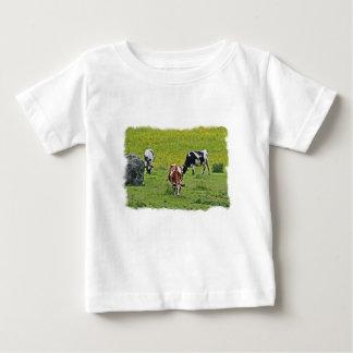 Cows_0068 T-shirt Pour Bébé
