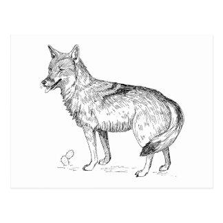 Coyote Cartes Postales