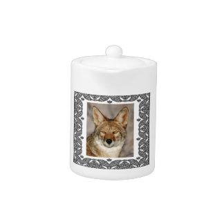 coyote dans un cadre