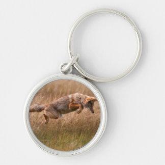 Coyote sautant - prés de gibbon porte-clé rond argenté