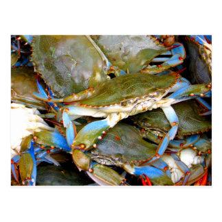 Crabe bleu carte postale