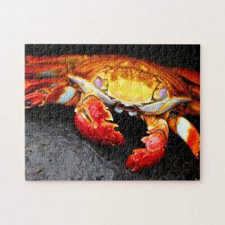 Crabe de Galapagos Puzzle