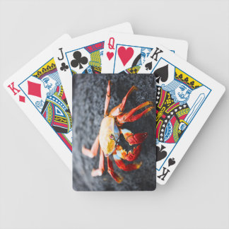 Crabe de lightfoot de sortie sur une roche noire d jeux de cartes