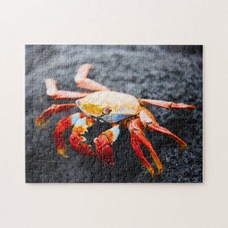 Crabe de lightfoot de sortie sur une roche noire d puzzle