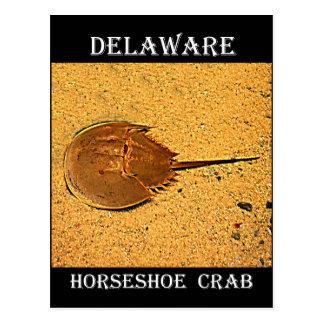 Crabe en fer à cheval du Delaware Carte Postale
