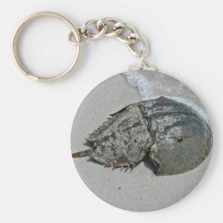Crabe en fer à cheval - mâle porte-clef